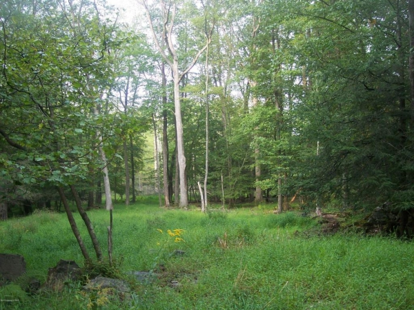 Almost 15 acres in the heart of Barrett Township.