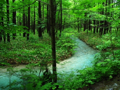 Forest bathing in the Poconos cleans the mind and body